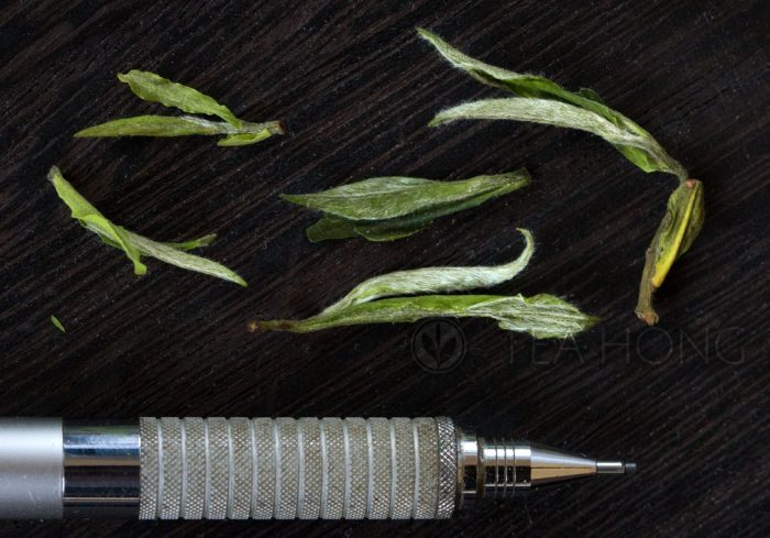 Tealeaves of Huangshan Spring Equinox photographed together with a pencil to illustrate the size of the plucks