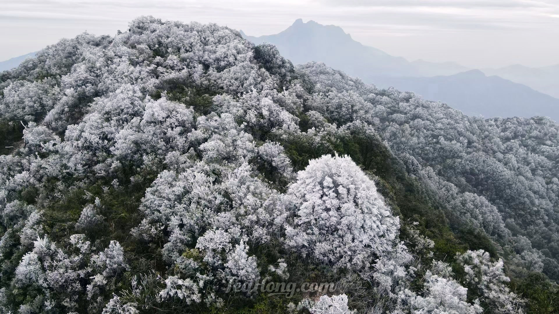 Snow covering tea gardens in Fenghuang Shan