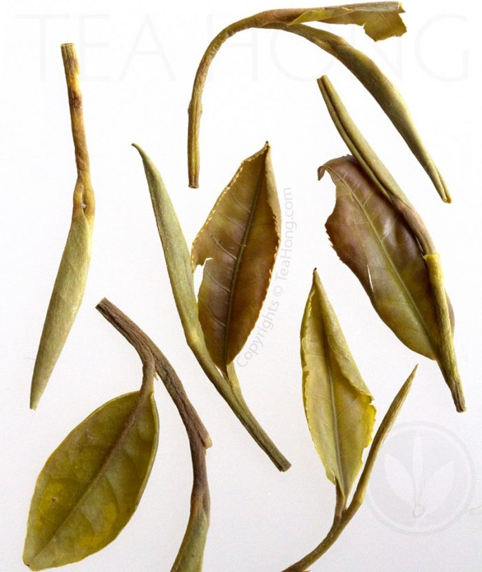 Infused leaves of Mini Peony shows the gentle oxidation on the tender young leaves
