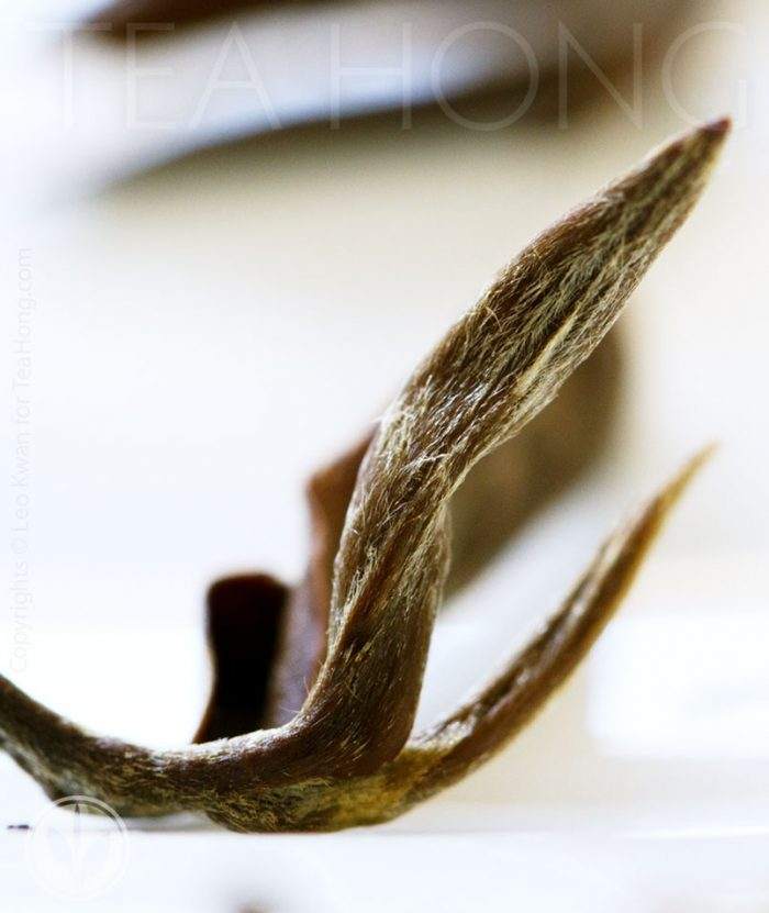 Closeup of an infused leaf shoot of Tea Hong's Oriental Beauty