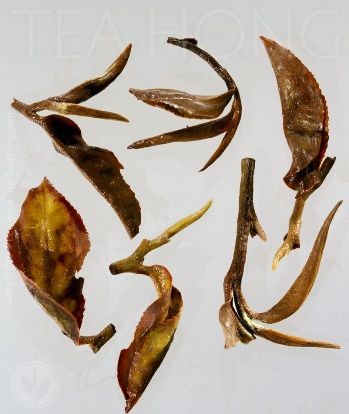 Infused leaves reveal the delicate handling of the oolong bruising processing on leaf edges, also high quality plucks