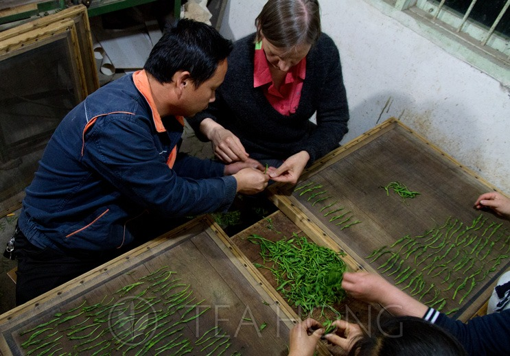 Client from Belgium learning a step in tea processing