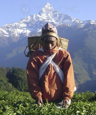 Nepal, the Himalayas
