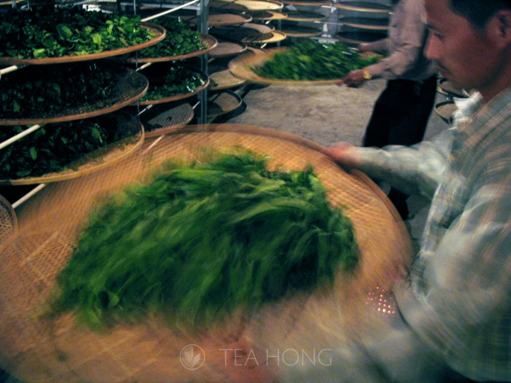 "Yao Qing — the oolong ""fermentation"" process"