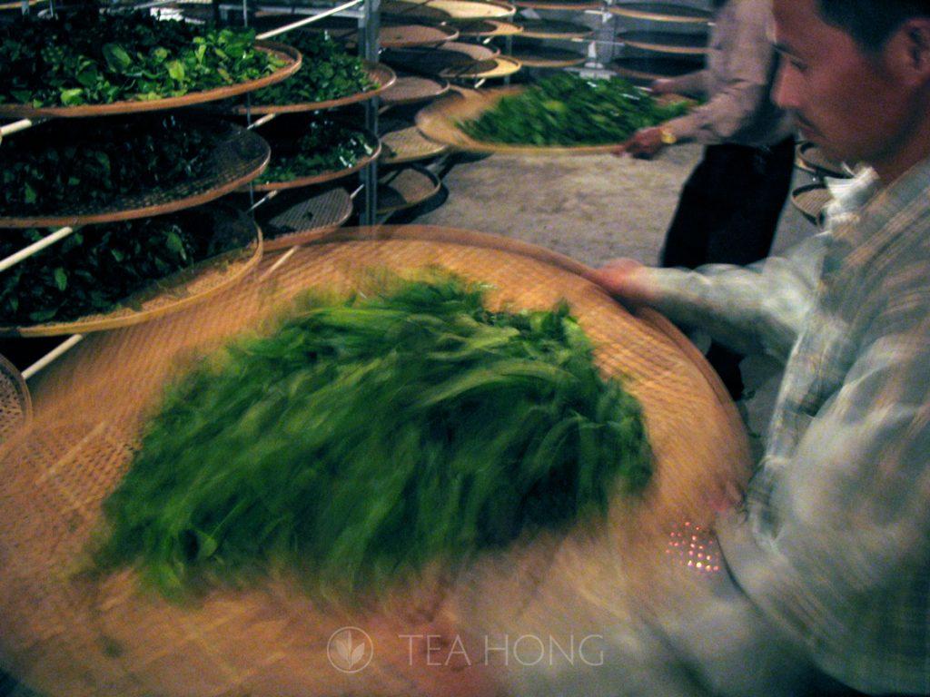 "Yao Qing — the oolong ""fermentation"" process"