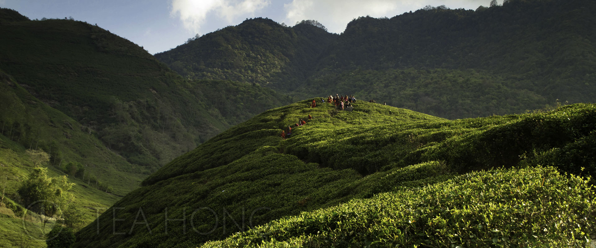 Tea Regions of TeaHomg.com: Nepal / Himalayas