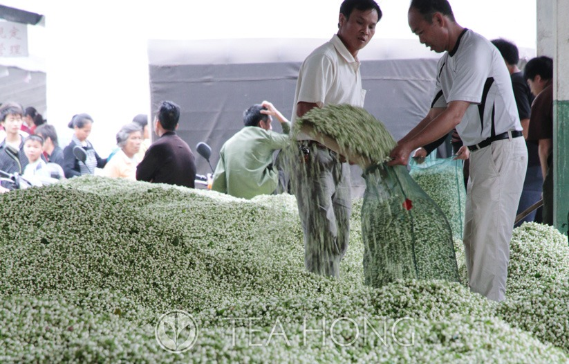 Jasmine flower buds being traded in the wholesale market for scenters