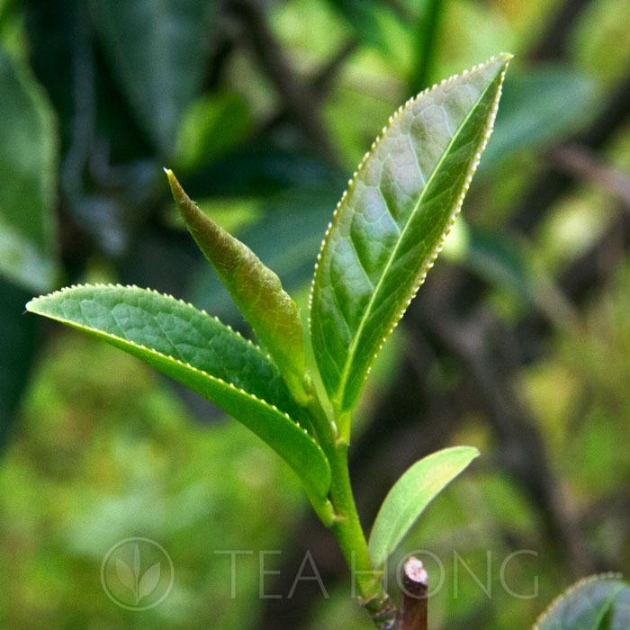 Tea Hong Tea Category Selection theme image
