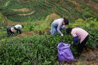 Wang's peak farm