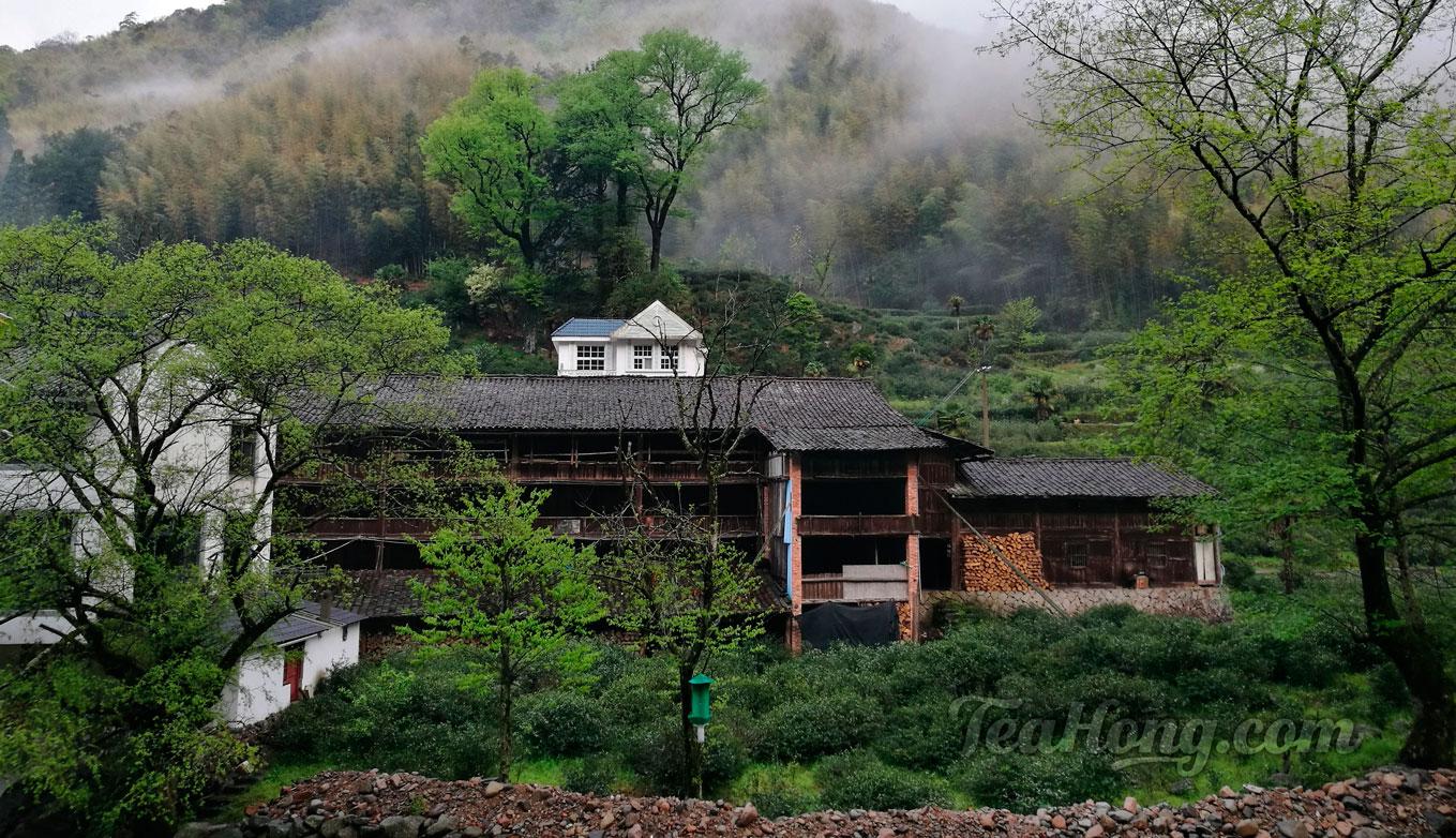Tea farm in Tongmuguan