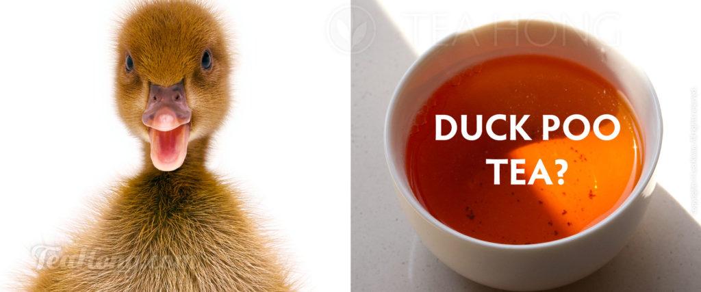 Duck Poo Tea?