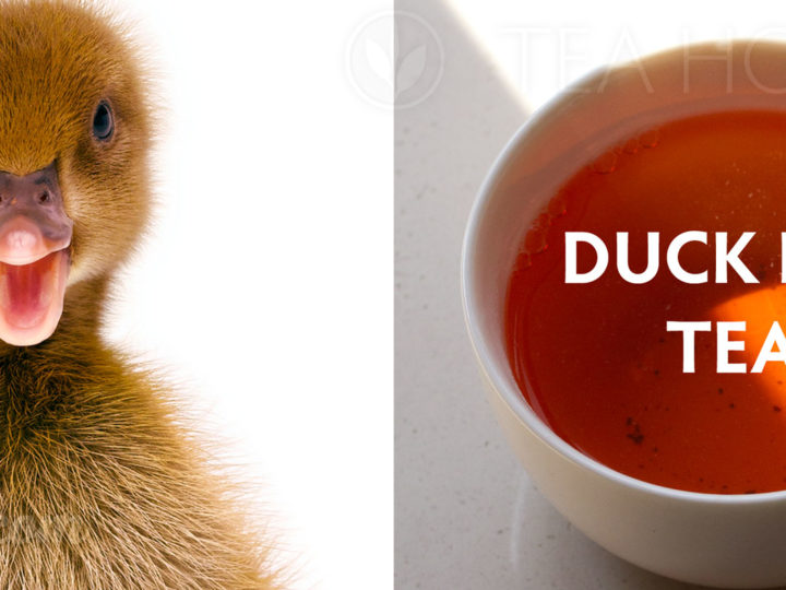 Seriously is there a Duck Poo Tea?
