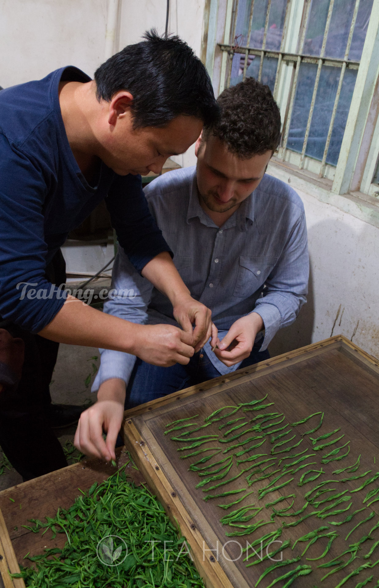 Client from Europe learning to produce Taiping Houkui green tea